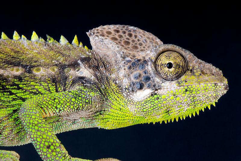 крокодиловый