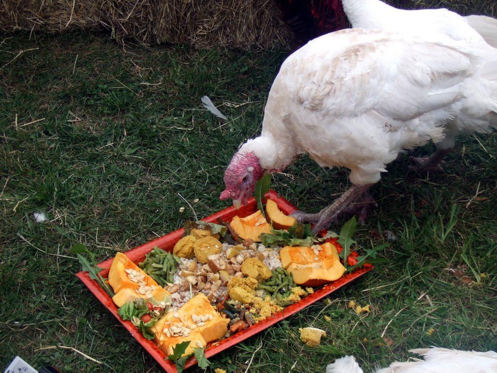 индюшка кушает овощи
