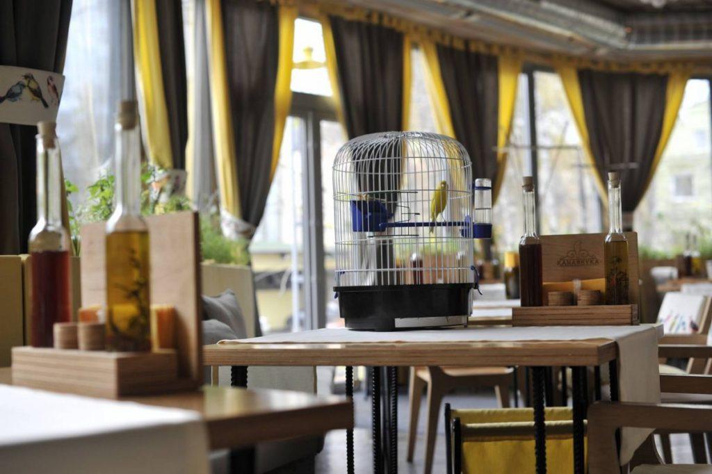 канарейка в клетке в ресторане